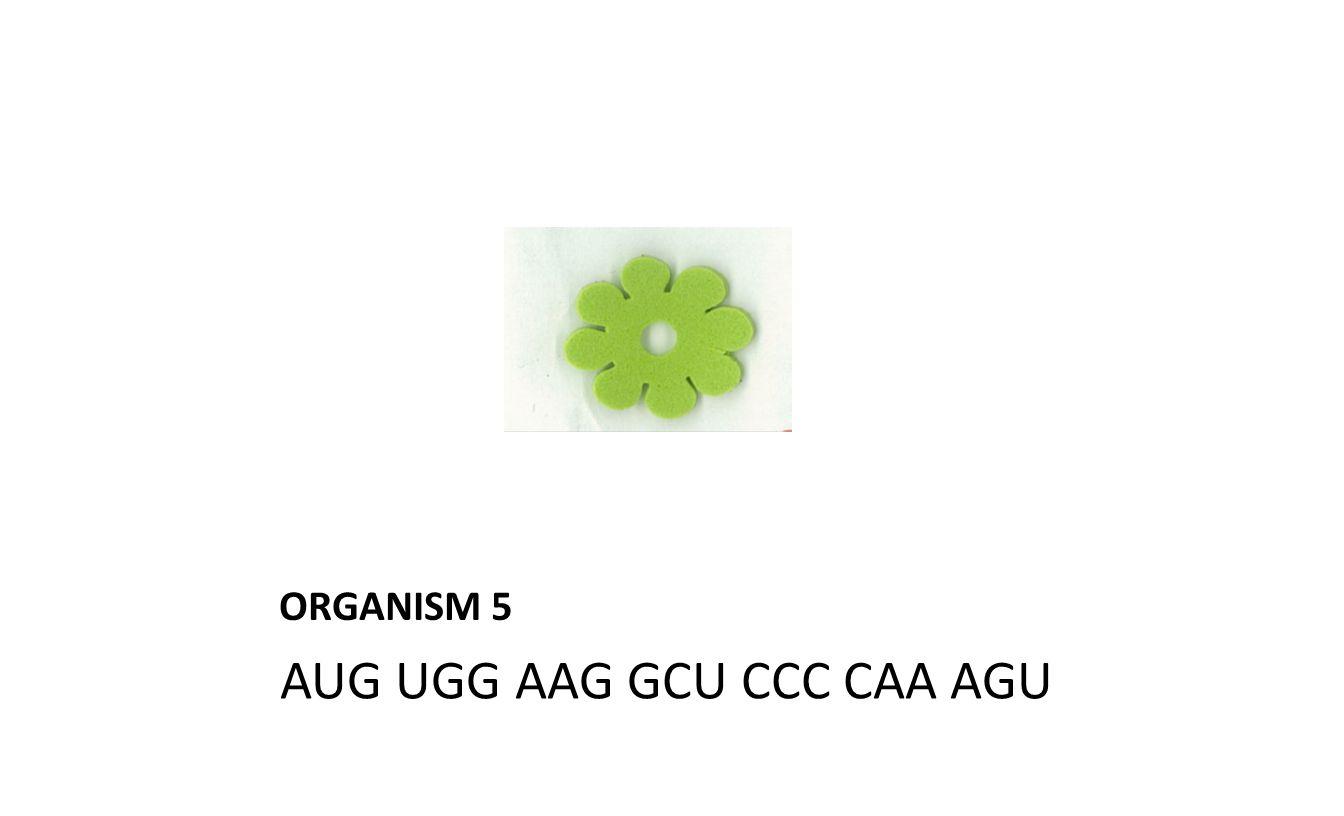 ORGANISM 5 AUG UGG AAG GCU CCC CAA AGU