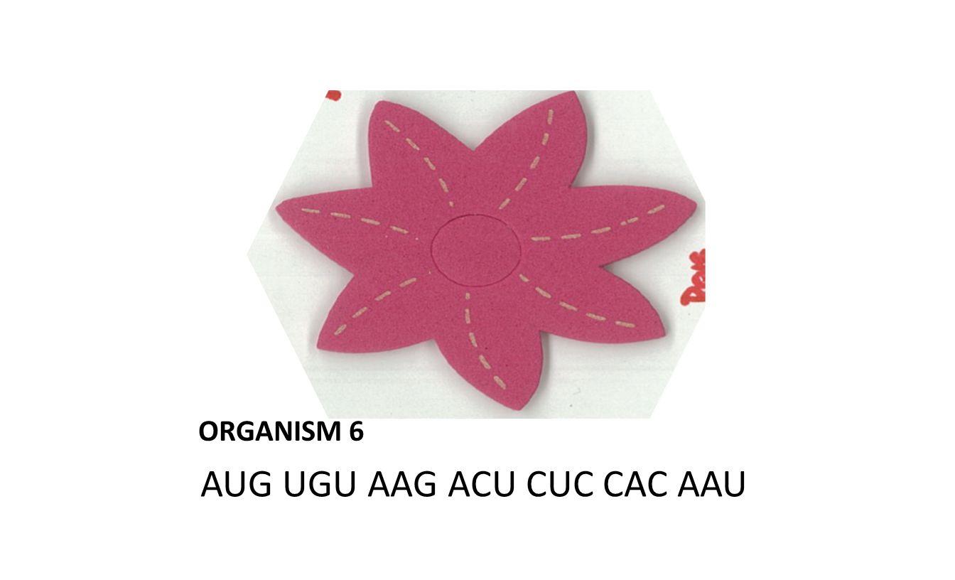 ORGANISM 6 AUG UGU AAG ACU CUC CAC AAU