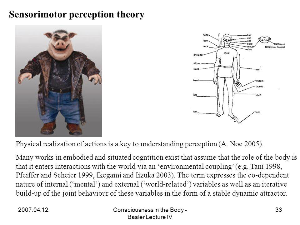 2007.04.12.Consciousness in the Body - Basler Lecture IV 33 Sensorimotor perception theory Physical realization of actions is a key to understanding perception (A.
