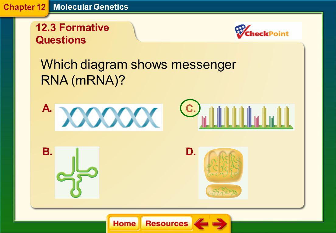 In the RNA molecule, uracil replaces _______. A. adenine B. cytosine C. purine D. thymine Molecular Genetics 12.3 Formative Questions Chapter 12