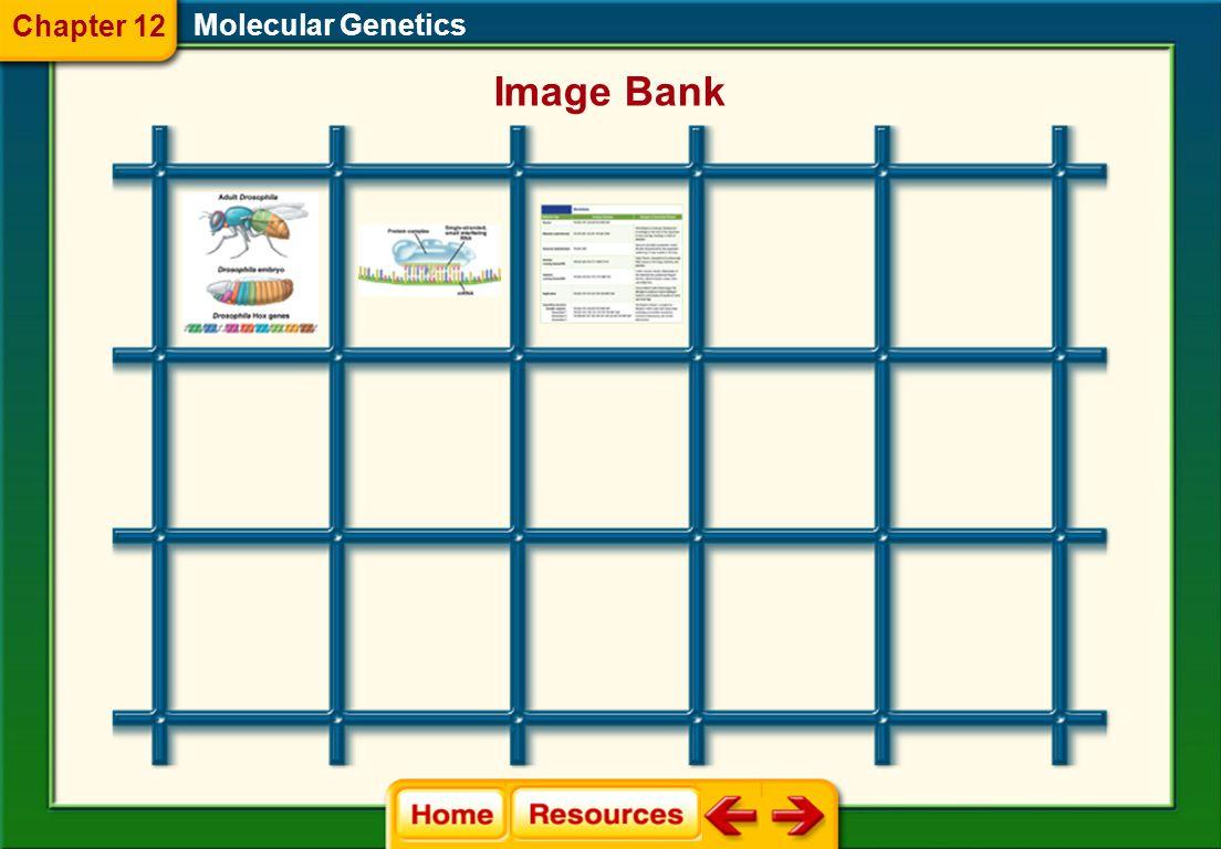 Molecular Genetics Image Bank Chapter 12