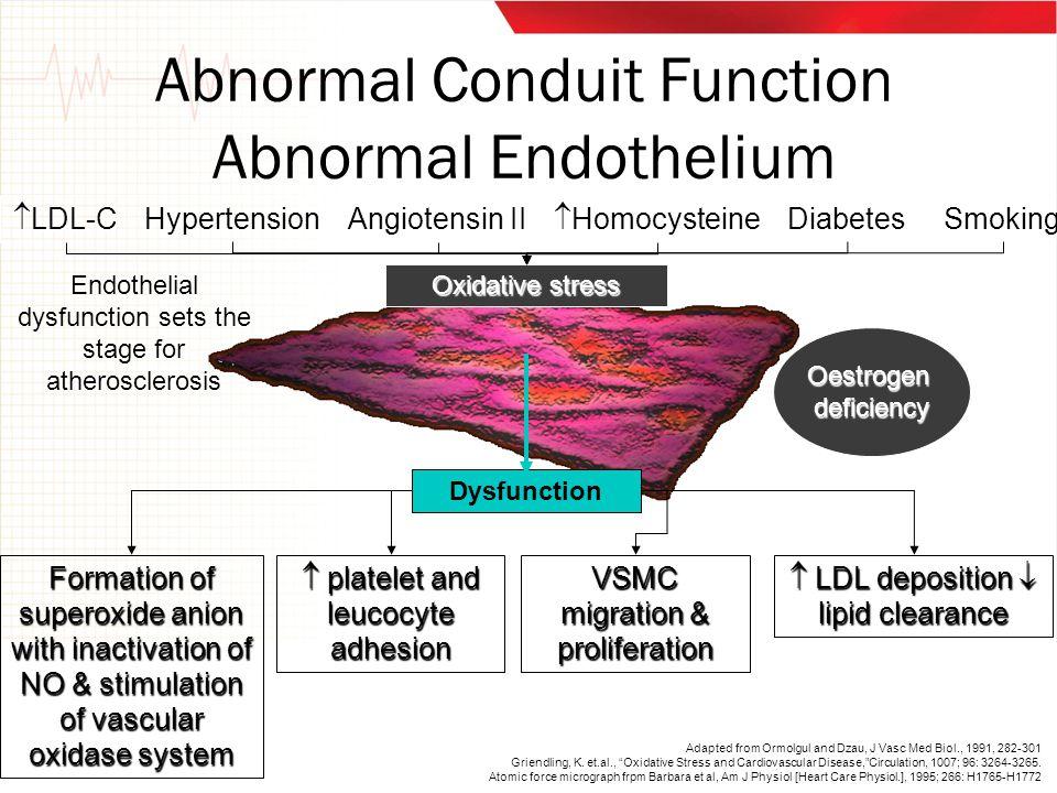 Abnormal Conduit Function Abnormal Endothelium Dysfunction  LDL-C HypertensionDiabetesSmoking Oxidative stress Angiotensin II  Homocysteine Oestroge