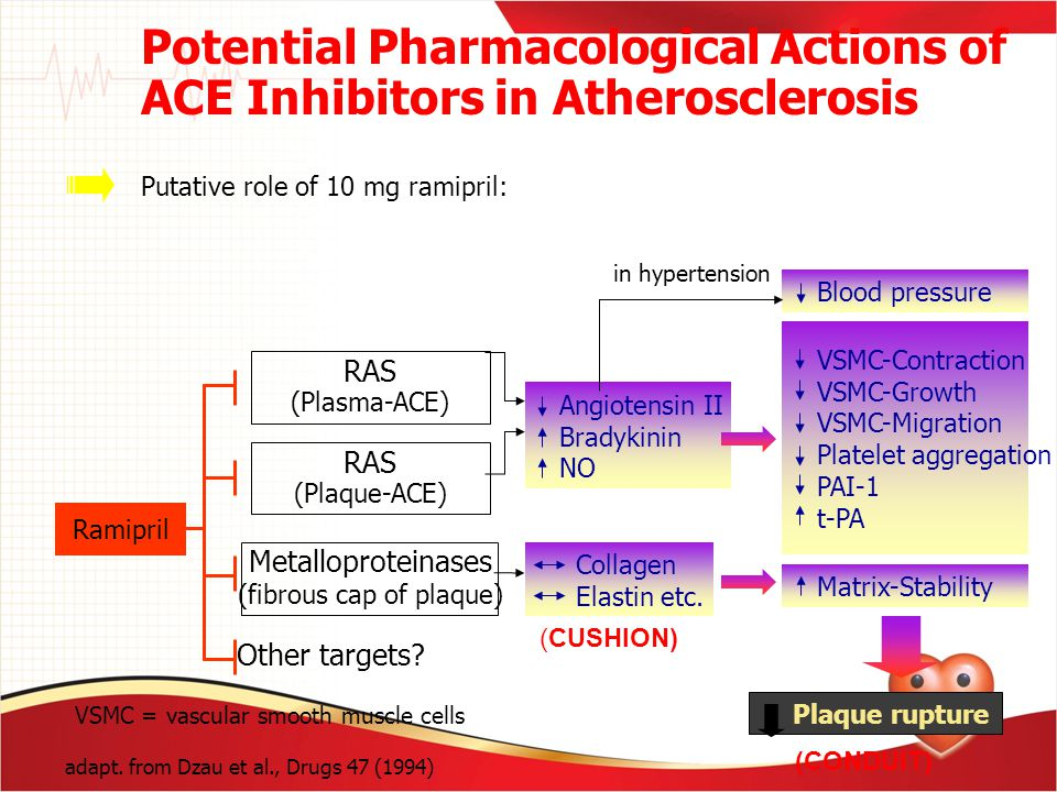 VSMC-Contraction VSMC-Growth VSMC-Migration Platelet aggregation PAI-1 t-PA Putative role of 10 mg ramipril: Potential Pharmacological Actions of ACE