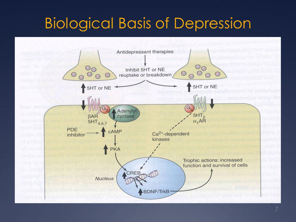 Antidepressants: Onset of Action  Clinical effect is usually not manifest for 1-3 weeks  Clinical rule is usually to treat patient for a minimum of 6 wks at an adequate dosage before changing  Synaptic effects occur immediately (hrs)  Adverse effects have same time course as synaptic effects 8