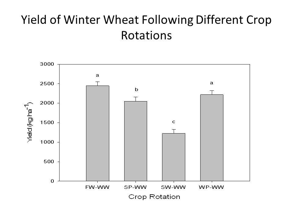 Yield of Winter Wheat Following Different Crop Rotations