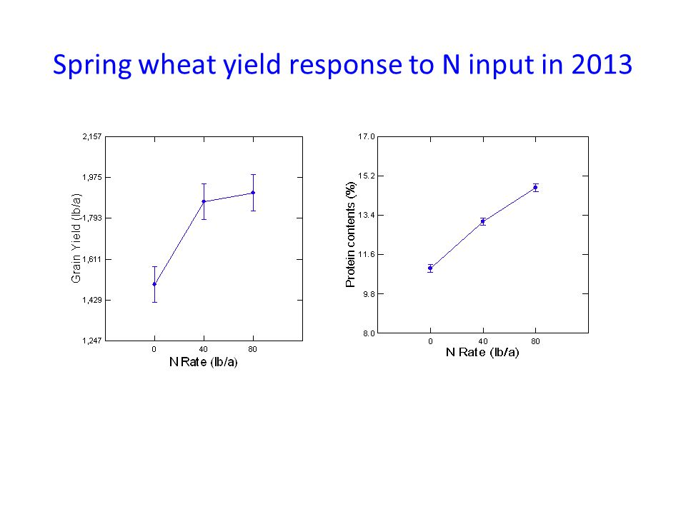 Spring wheat yield response to N input in 2013