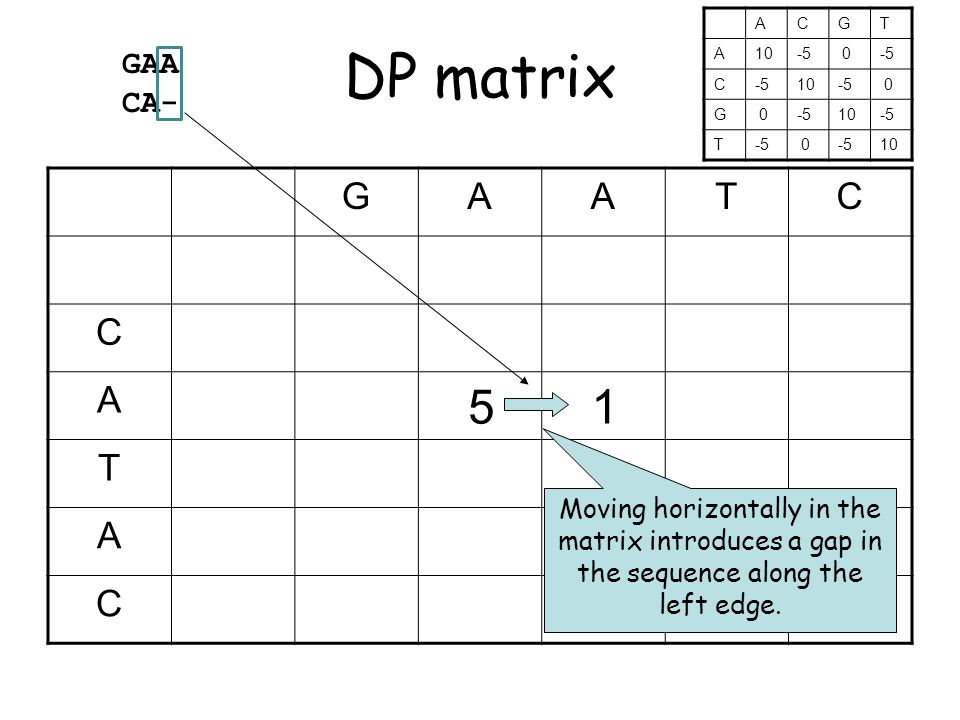 DP matrix GAATC C A 5 1 T A C Moving horizontally in the matrix introduces a gap in the sequence along the left edge.