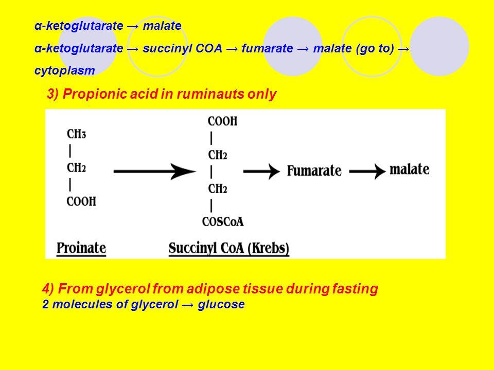 α-ketoglutarate → malate α-ketoglutarate → succinyl COA → fumarate → malate (go to) → cytoplasm 3) Propionic acid in ruminauts only 4) From glycerol from adipose tissue during fasting 2 molecules of glycerol → glucose
