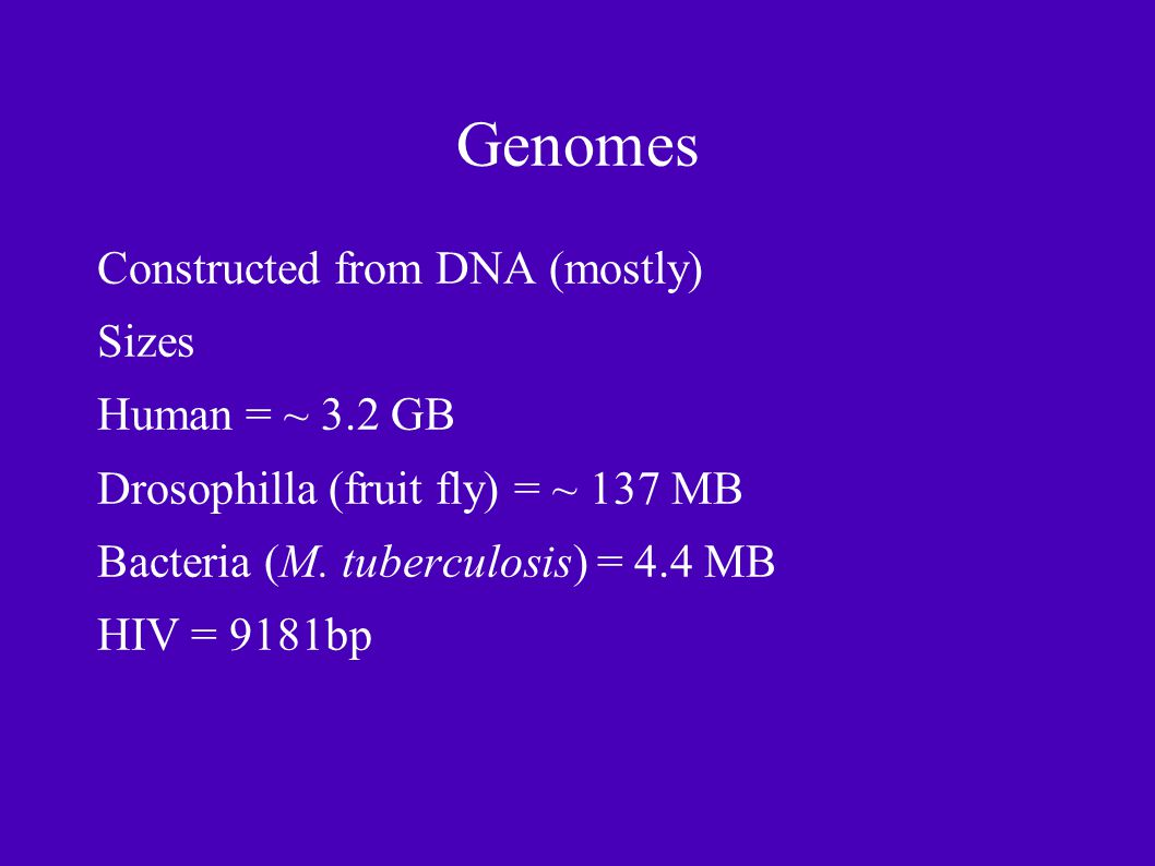 Genomes Constructed from DNA (mostly) Sizes Human = ~ 3.2 GB Drosophilla (fruit fly) = ~ 137 MB Bacteria (M.