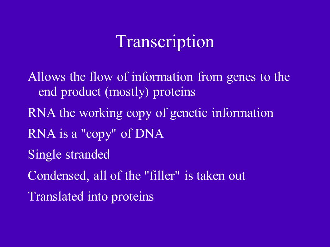 Transcription Allows the flow of information from genes to the end product (mostly) proteins RNA the working copy of genetic information RNA is a copy of DNA Single stranded Condensed, all of the filler is taken out Translated into proteins