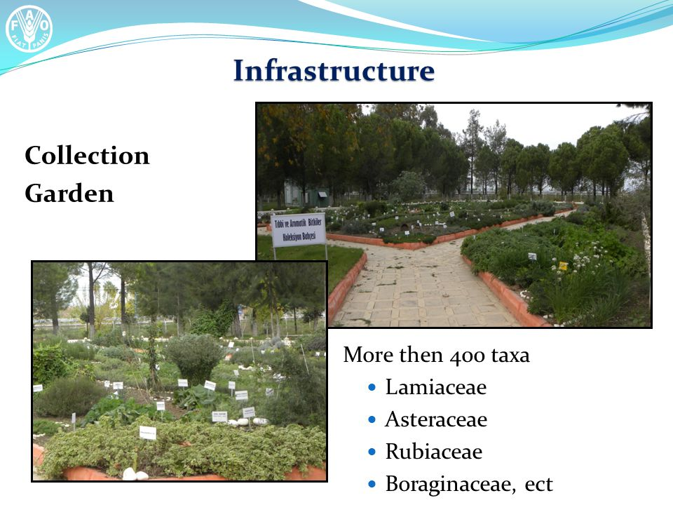 Infrastructure Collection Garden More then 400 taxa Lamiaceae Asteraceae Rubiaceae Boraginaceae, ect