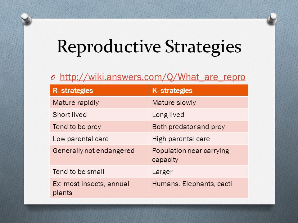 Reproductive Strategies O http://wiki.answers.com/Q/What_are_repro ductive_strategies http://wiki.answers.com/Q/What_are_repro ductive_strategies R- strategiesK- strategies Mature rapidlyMature slowly Short livedLong lived Tend to be preyBoth predator and prey Low parental careHigh parental care Generally not endangeredPopulation near carrying capacity Tend to be smallLarger Ex: most insects, annual plants Humans.