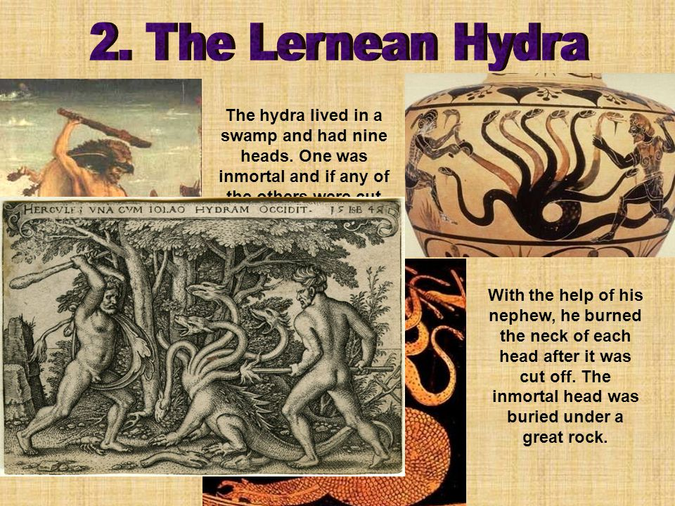 The hydra lived in a swamp and had nine heads.