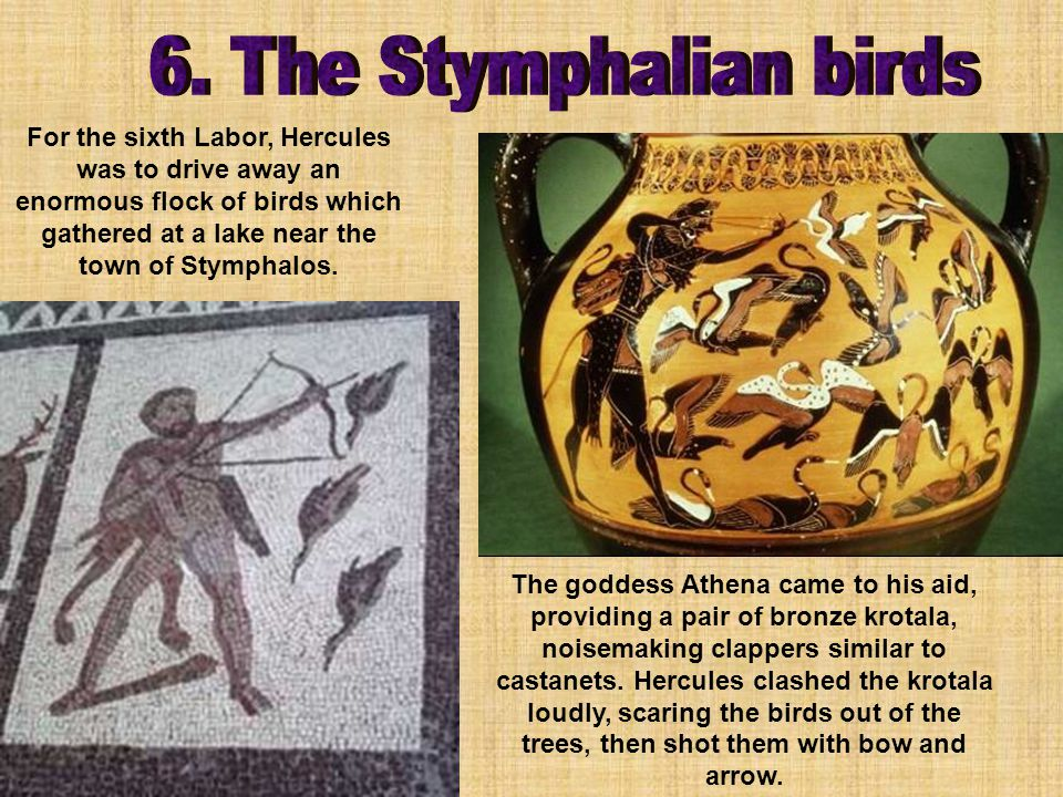 For the sixth Labor, Hercules was to drive away an enormous flock of birds which gathered at a lake near the town of Stymphalos.