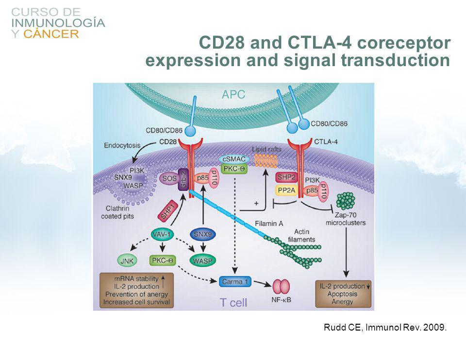 Rudd CE, Immunol Rev. 2009. CD28 and CTLA-4 coreceptor expression and signal transduction
