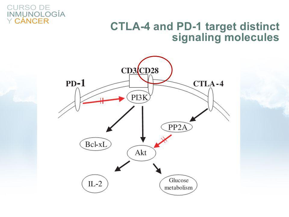 CTLA-4 and PD-1 target distinct signaling molecules