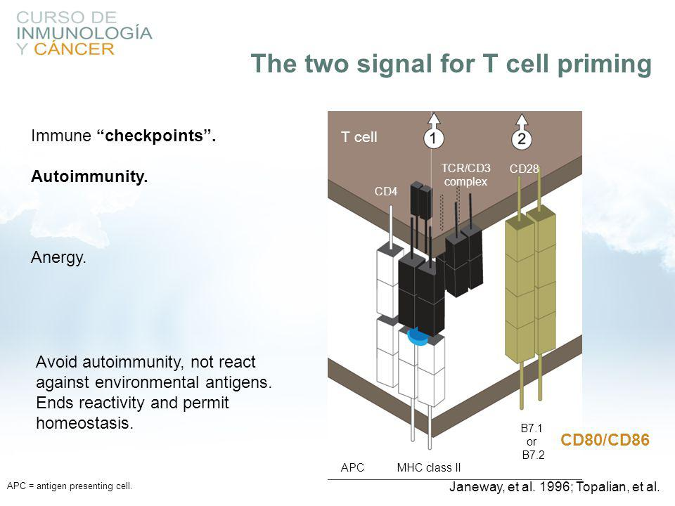 "APC = antigen presenting cell. T cell CD4 TCR/CD3 complex CD28 APCMHC class II B7.1 or B7.2 Immune ""checkpoints"". Autoimmunity. Anergy. CD80/CD86 Avoi"