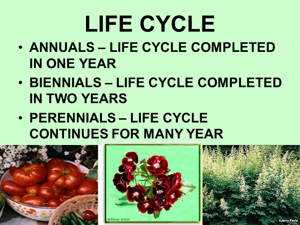 LIFE CYCLE ANNUALS – LIFE CYCLE COMPLETED IN ONE YEAR BIENNIALS – LIFE CYCLE COMPLETED IN TWO YEARS PERENNIALS – LIFE CYCLE CONTINUES FOR MANY YEAR