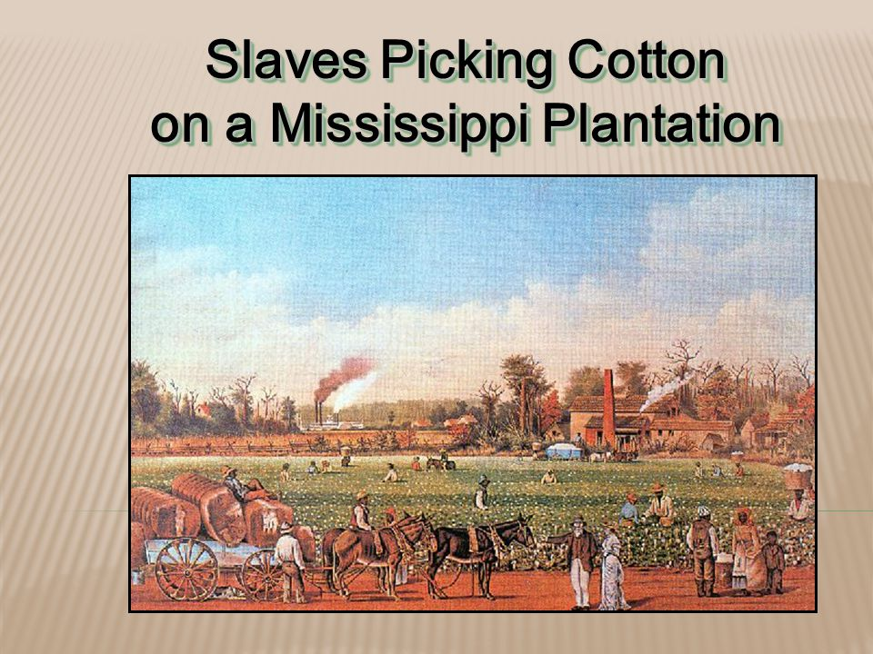 Slaves Picking Cotton on a Mississippi Plantation