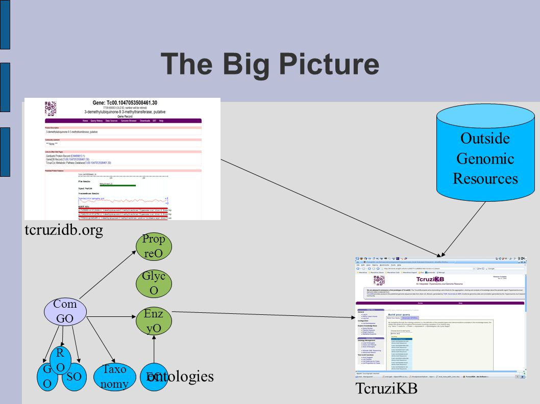 The Big Picture tcruzidb.org Outside Genomic Resources TcruziKB Com GO GOGO SO Enz yO Glyc O Prop reO RORO Taxo nomy EC ontologies