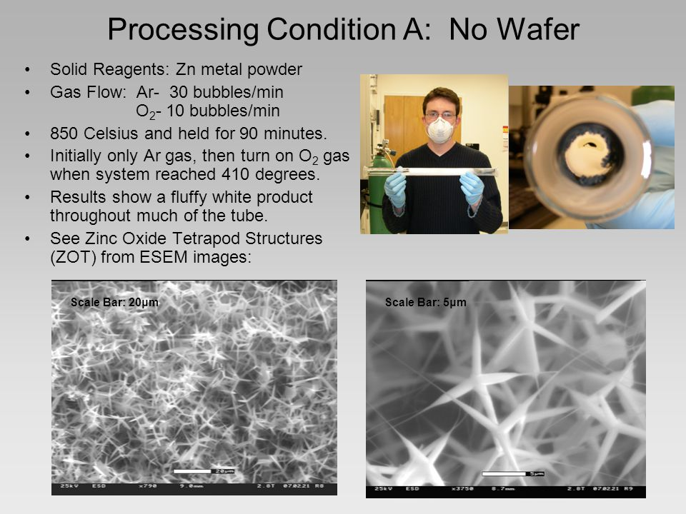 Processing Condition B: Colloidal Gold Reasoning: Instead of Zn and O 2 reacting in air (or on the glass tube/ceramic boat) to form tetrapods, a catalyst-induced nucleation may cause linear rods to grow.