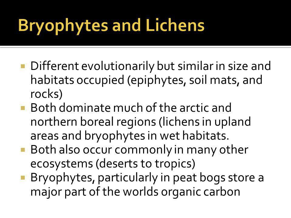  Different evolutionarily but similar in size and habitats occupied (epiphytes, soil mats, and rocks)  Both dominate much of the arctic and northern boreal regions (lichens in upland areas and bryophytes in wet habitats.