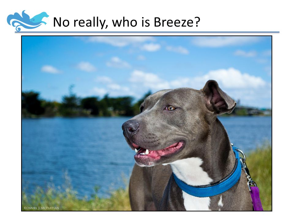 No really, who is Breeze