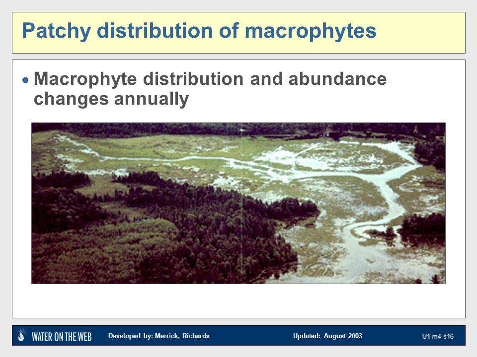 Developed by: Merrick, Richards Updated: August 2003 U1-m4-s16 www.glifwc.org/ Patchy distribution of macrophytes  Macrophyte distribution and abundance changes annually