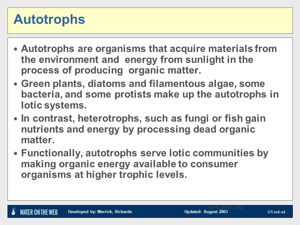 Developed by: Merrick, Richards Updated: August 2003 U1-m4-s4 www.glifwc.org/ Autotrophs  Autotrophs are organisms that acquire materials from the environment and energy from sunlight in the process of producing organic matter.
