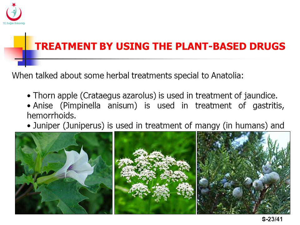 S-23/41 TREATMENT BY USING THE PLANT-BASED DRUGS When talked about some herbal treatments special to Anatolia: Thorn apple (Crataegus azarolus) is used in treatment of jaundice.