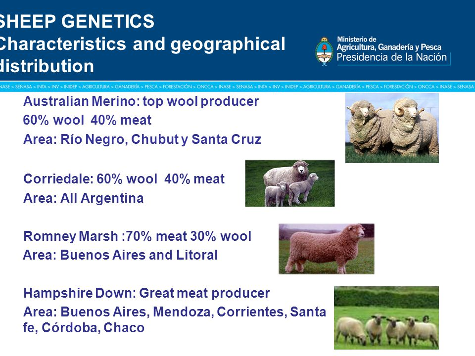 Título: Tipografía Arial / Versión: bold Cuerpo 16 a 18 / Color blanco SHEEP GENETICS Characteristics and geographical distribution Australian Merino: top wool producer 60% wool 40% meat Area: Río Negro, Chubut y Santa Cruz Corriedale: 60% wool 40% meat Area: All Argentina Romney Marsh :70% meat 30% wool Area: Buenos Aires and Litoral Hampshire Down: Great meat producer Area: Buenos Aires, Mendoza, Corrientes, Santa fe, Córdoba, Chaco