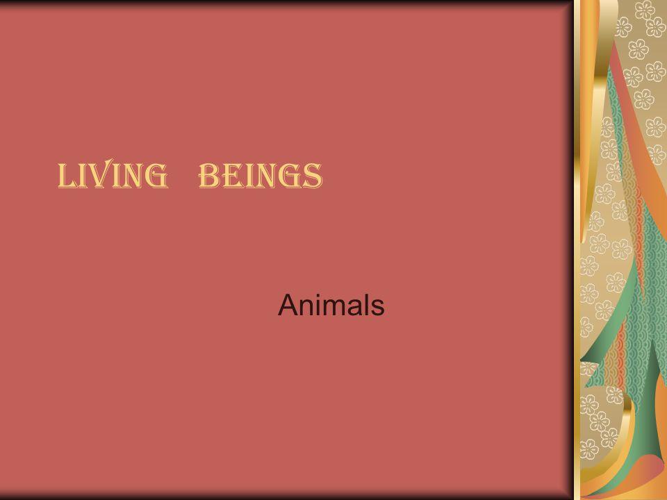 parts of animals Claws Wings Fur Fin Feather Trunk Whiskers Paw Beak Horns Tail Pençeler(ku ş larda) Kanat Kürk Yüzgeç Tüy Gövde Bıyık Pençe(vah ş i hayvanlarda) Gaga Boynuzlar Kuyruk