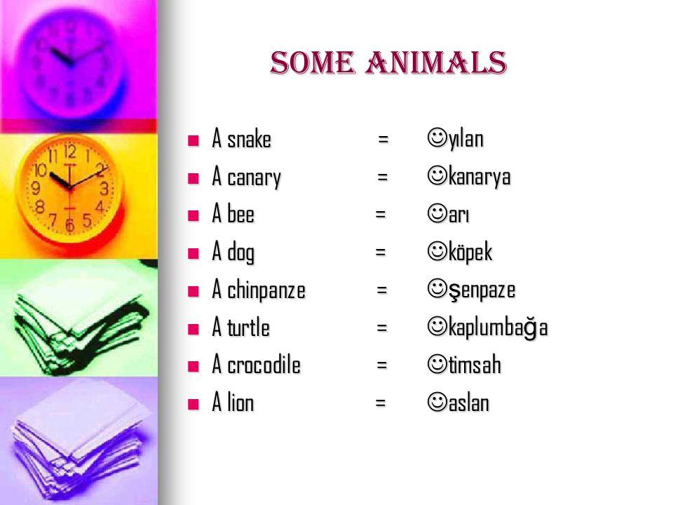some animals A cat = A cat = A sheep = A sheep = A cow = A cow = A chicken = A chicken = A monkey = A monkey = A horse = A horse = A rabbit = A rabbit = A butterfly = A butterfly = kedi kedi koyun koyun inek inek tavuk tavuk maymun maymun at at tav ş an tav ş an kelebek kelebek