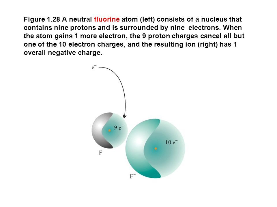 Figure 1.28 A neutral fluorine atom (left) consists of a nucleus that contains nine protons and is surrounded by nine electrons.