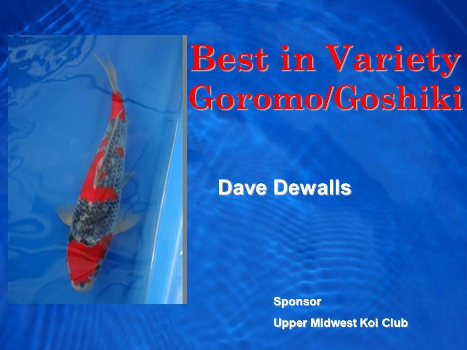 Best in Variety Goromo/Goshiki Dave Dewalls Sponsor Upper Midwest Koi Club