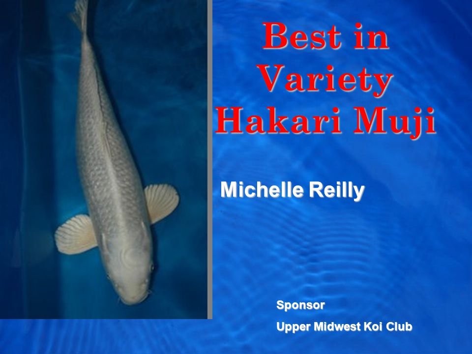 Best in Variety Hakari Muji Michelle Reilly Sponsor Upper Midwest Koi Club