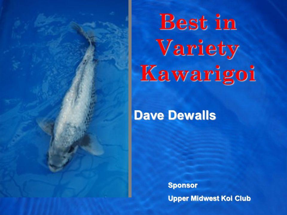 Best in Variety Kawarigoi Dave Dewalls Sponsor Upper Midwest Koi Club