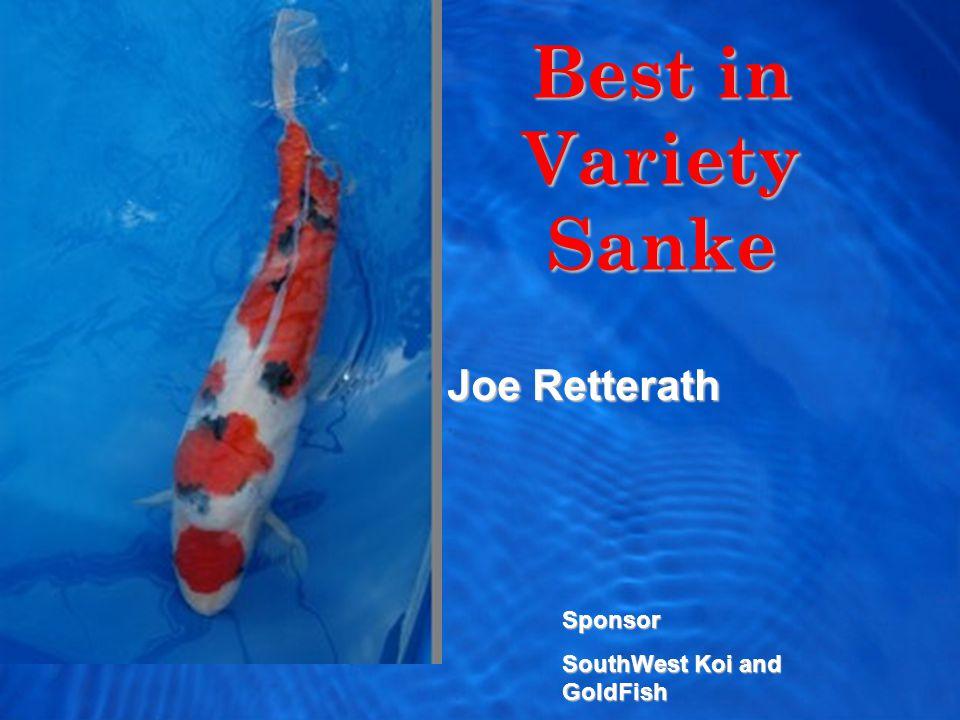 Best in Variety Sanke Joe Retterath Sponsor SouthWest Koi and GoldFish