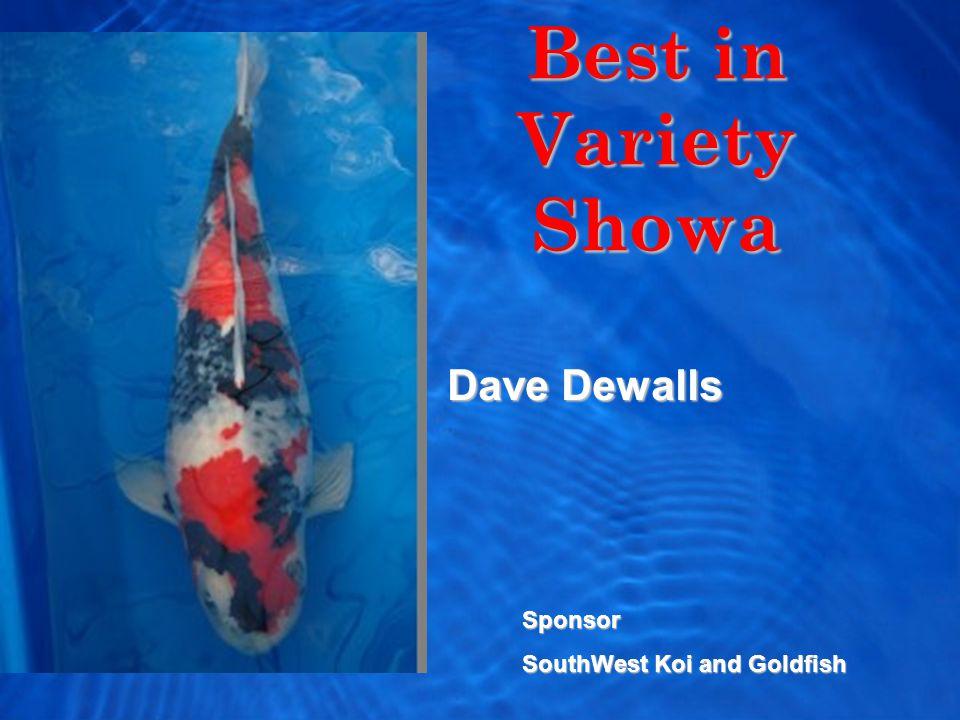 Best in Variety Showa Dave Dewalls Sponsor SouthWest Koi and Goldfish