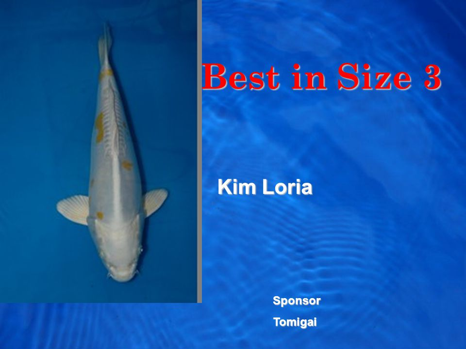 Best in Size 3 Kim Loria SponsorTomigai
