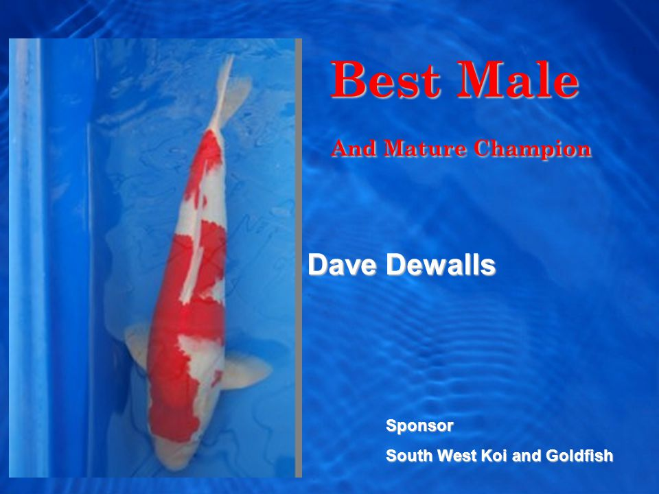 Best Male And Mature Champion And Mature Champion Dave Dewalls Sponsor South West Koi and Goldfish