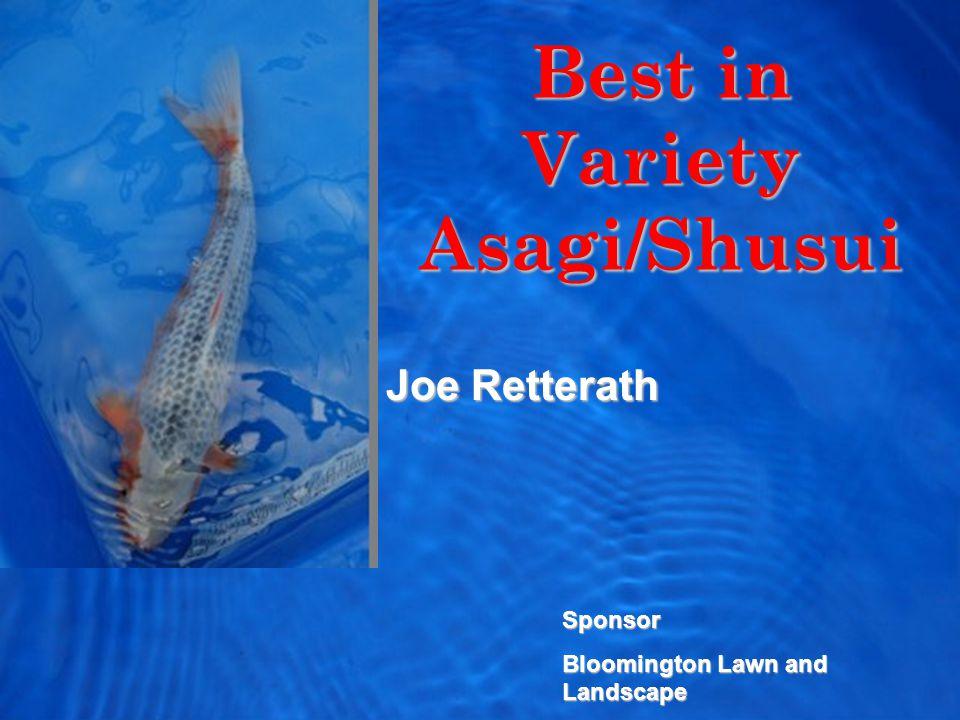 Best in Variety Asagi/Shusui Joe Retterath Sponsor Bloomington Lawn and Landscape