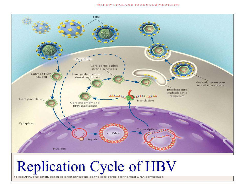 Chang MH Replication Cycle of HBV