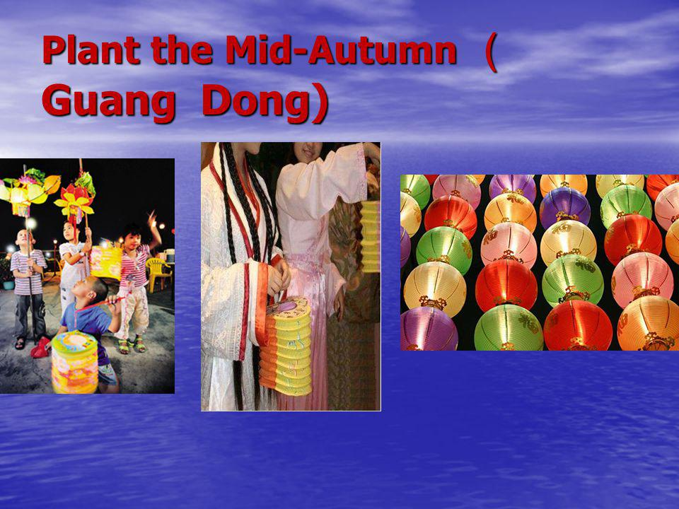 Plant the Mid-Autumn ( Guang Dong)