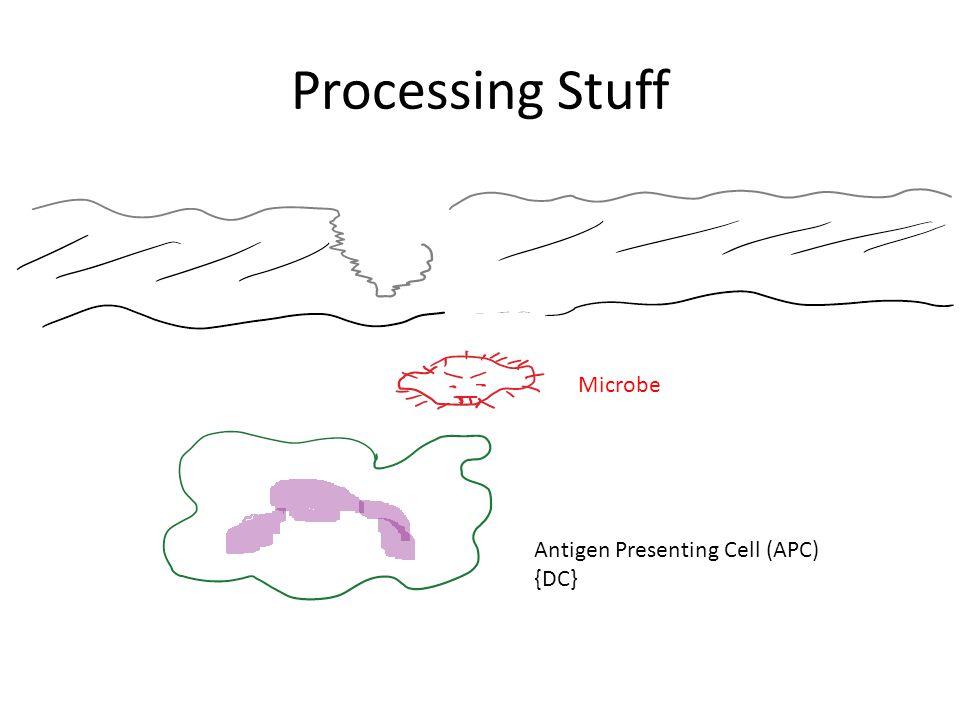 Processing Stuff Microbe Antigen Presenting Cell (APC) {DC}