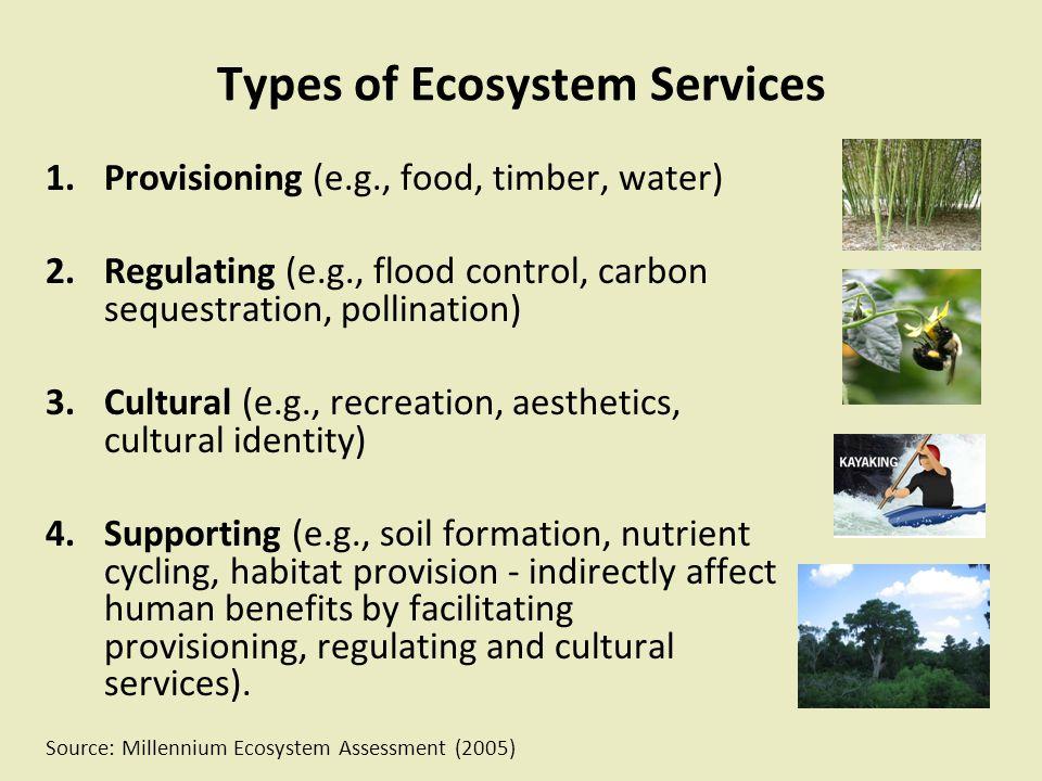 Development Plan trend Conservation Future land cover scenarios (2040)
