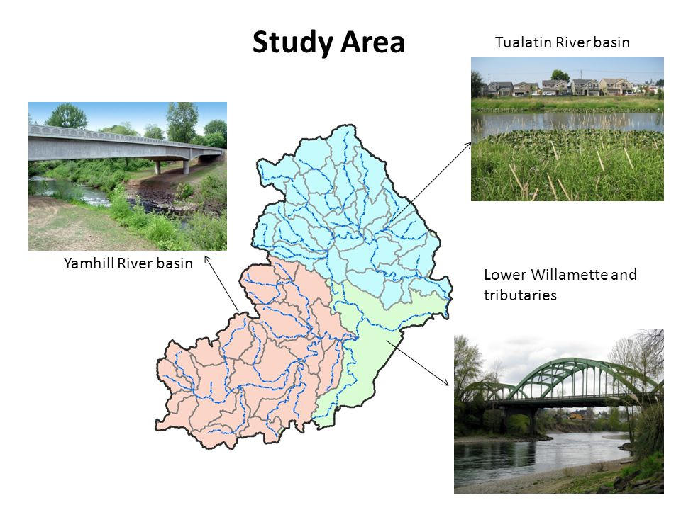 Yamhill River basin Tualatin River basin Lower Willamette and tributaries Study Area