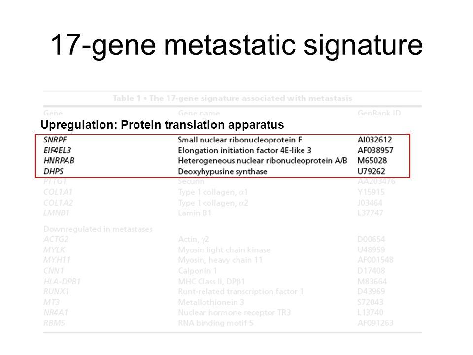 17-gene metastatic signature Upregulation: Protein translation apparatus