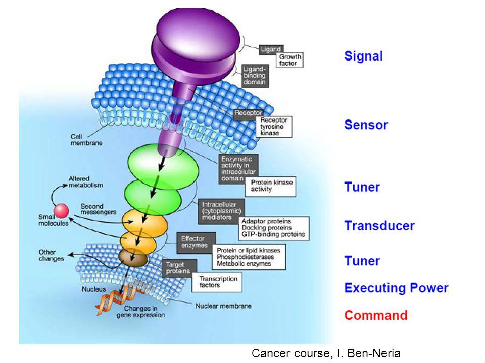 Cancer course, I. Ben-Neria
