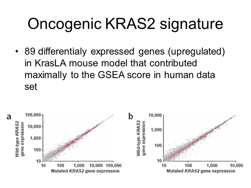 Oncogenic KRAS2 signature 89 differentialy expressed genes (upregulated) in KrasLA mouse model that contributed maximally to the GSEA score in human d